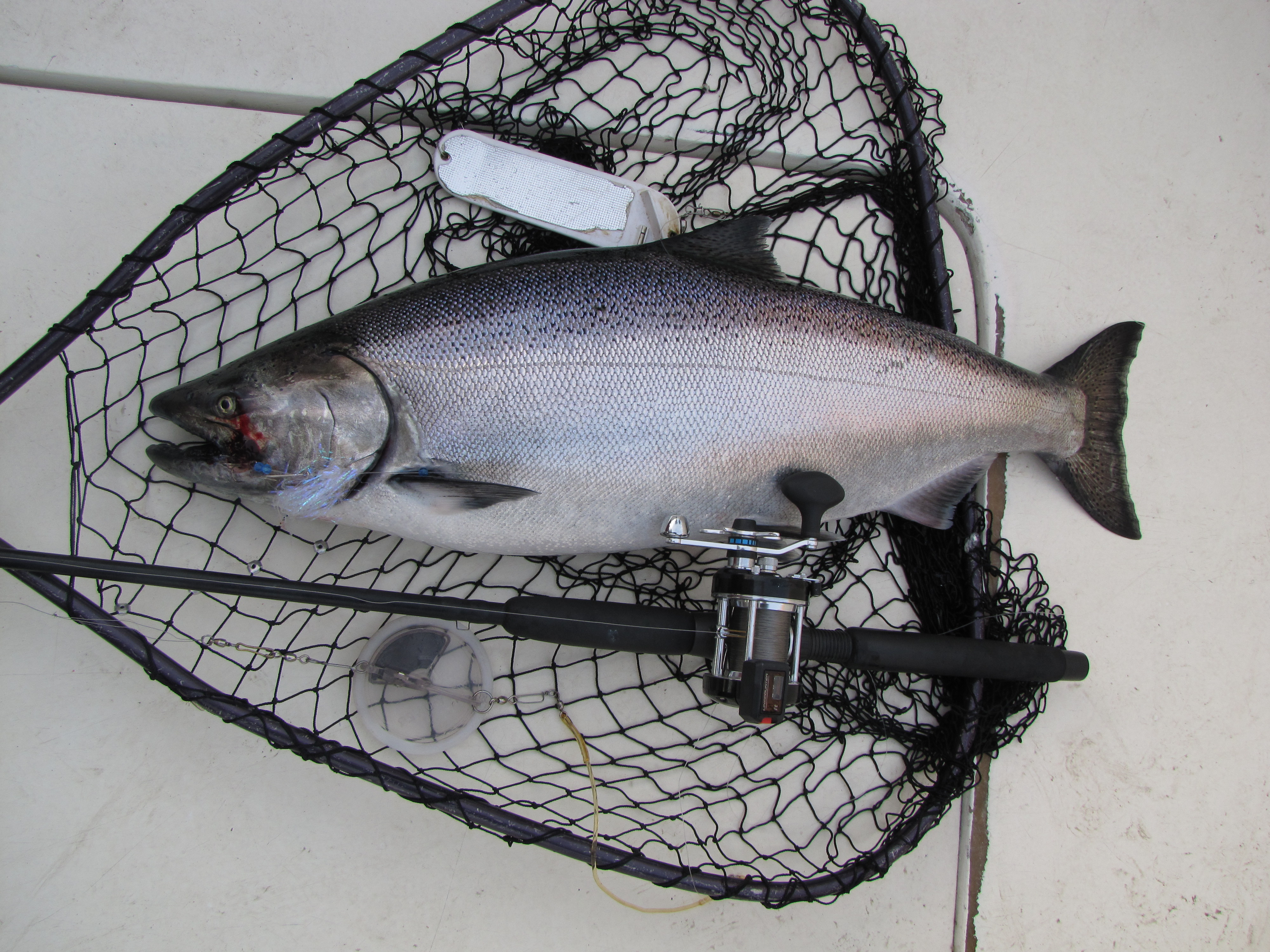 Lake ontariotrout and salmon fishing the abu garcia for Salmon fishing lake ontario