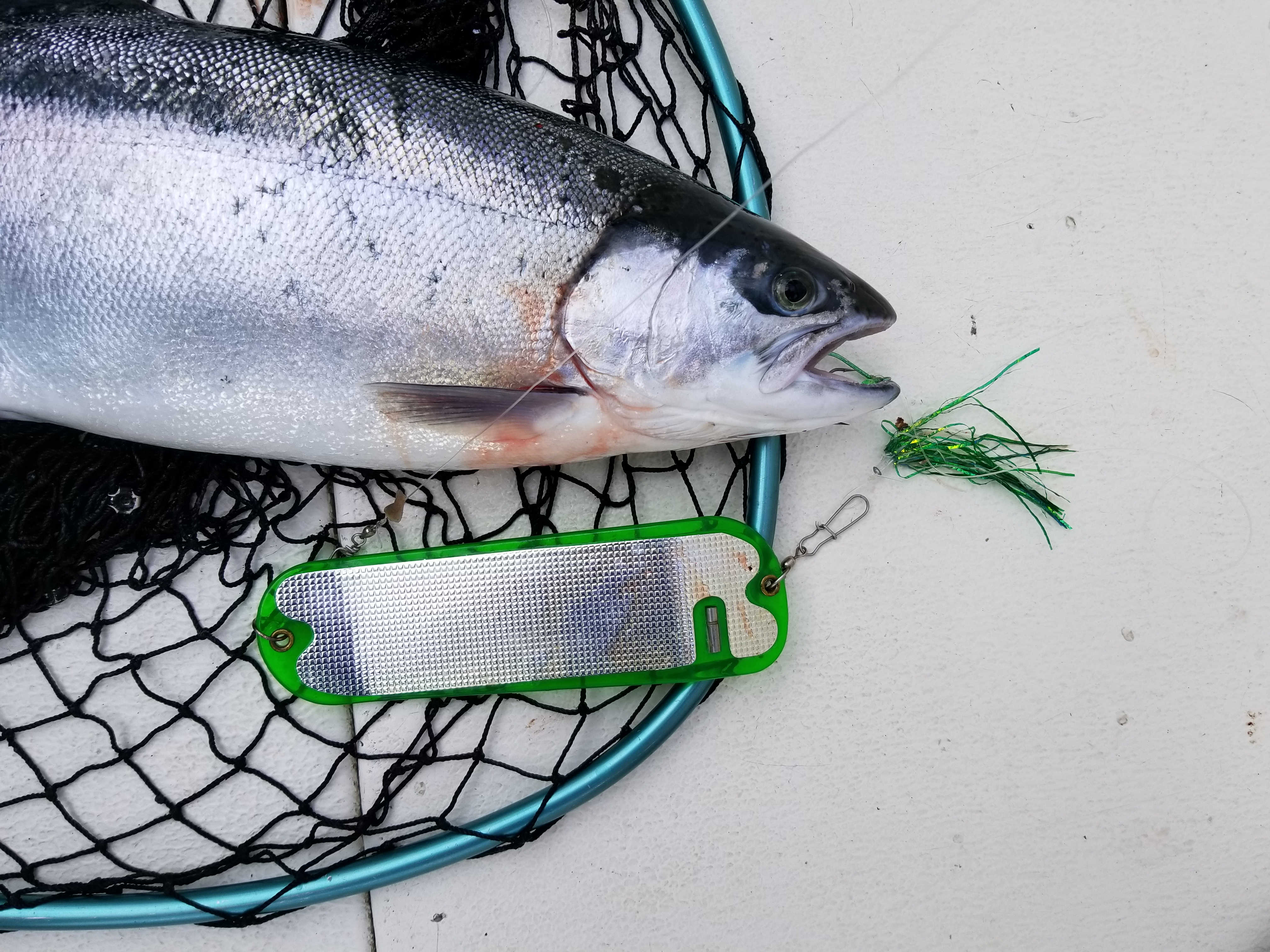 Lake Ontario Salmon Fishing Tips | Fish Doctor Charters - Part 2